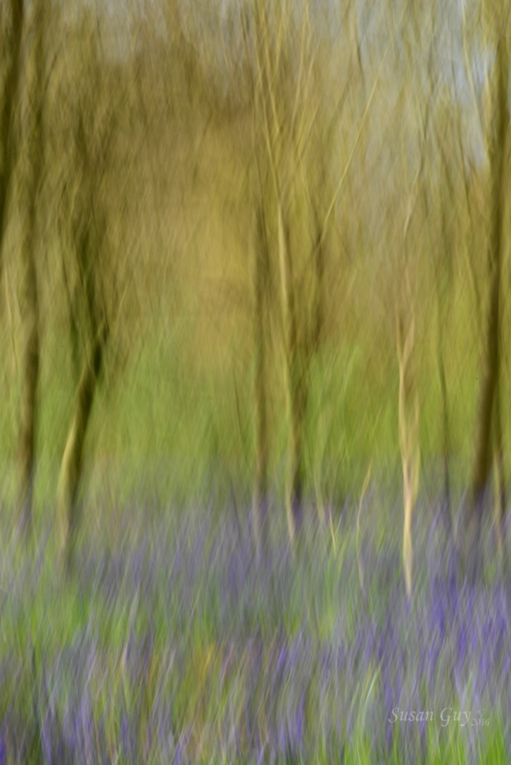 Susan Guy_Calke Abbey_Bluebells_Abstract_27.04.16_3 c