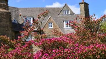 Susan Guy_Stoneywell_Cottage Garden_Azalea_01.05.15_(1_w