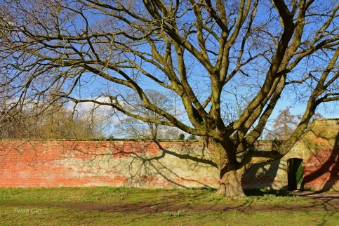 Susan Guy_Calke Abbey_Tree_Walled Garden_09.03.17_1 c