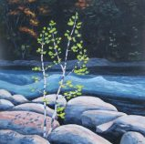 "Birches on the Gull River, acrylic on texturized canvas, 20"" x 20"" SOLD"