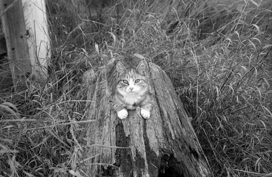 Clarinda Cat