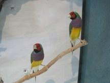 In Darwin Museum