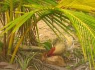 pollo con coco