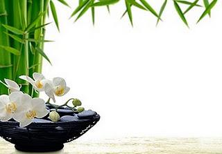 Feng shui susan levitt - Plants for good feng shui ...
