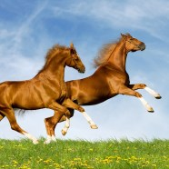 2015 GEMINI NEW MOON BEGINS HORSE MONTH