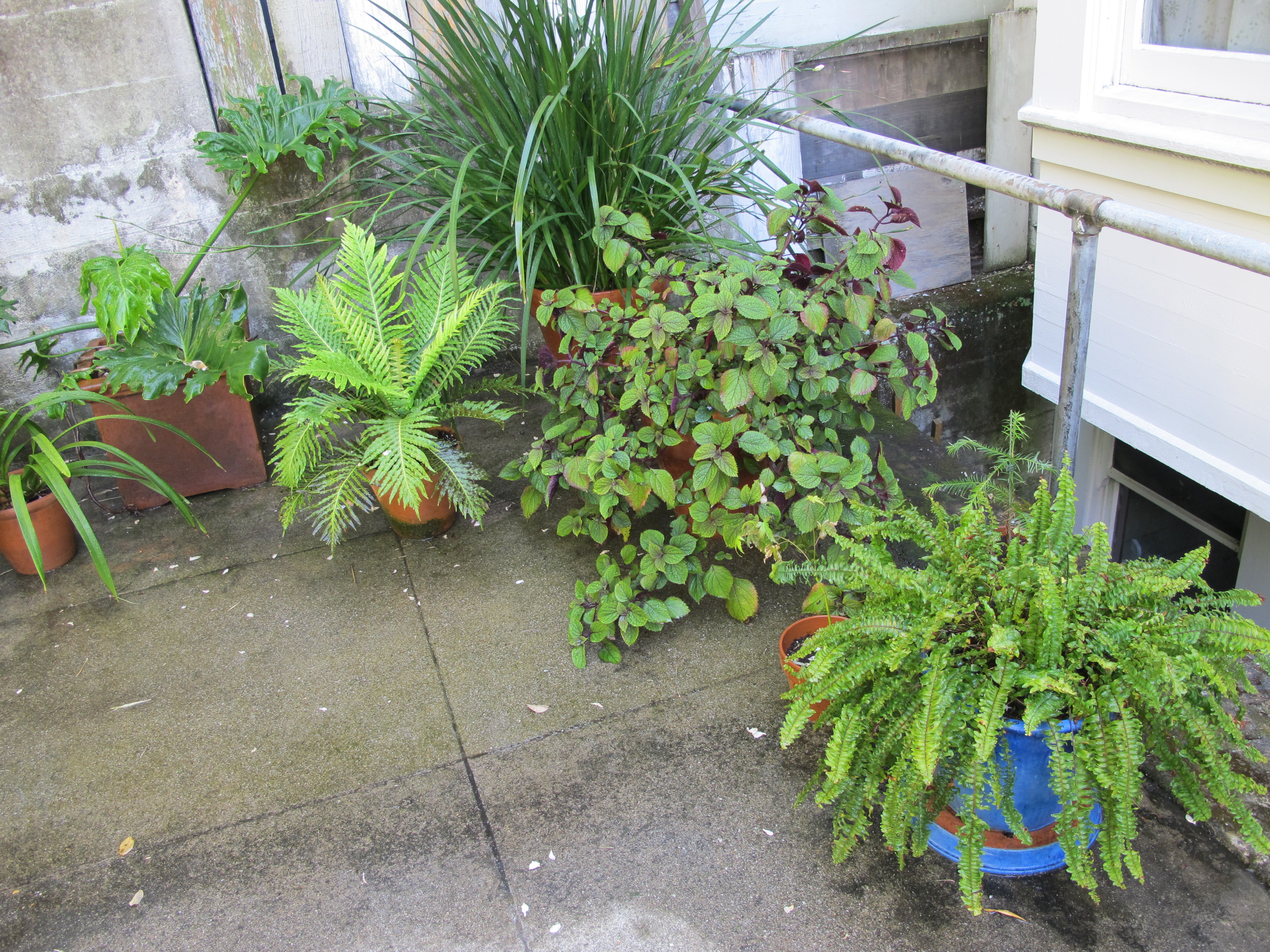 Good Feng Shui Container Gardening