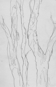 close up sketch of tea trees