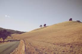 dry grass 3