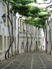 green-walkway