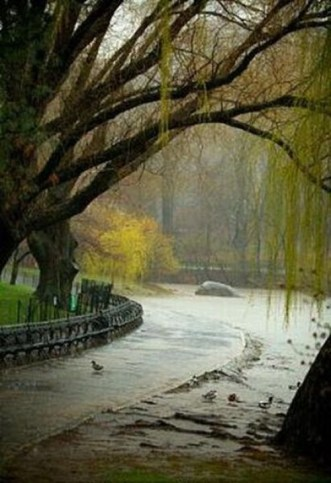 rain-park