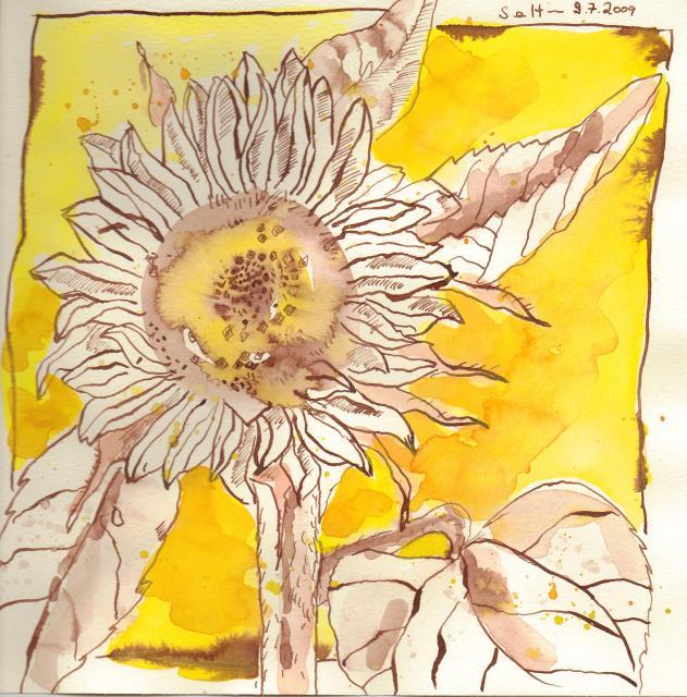 Sonnenblume - Zeichnung von Susanne Haun