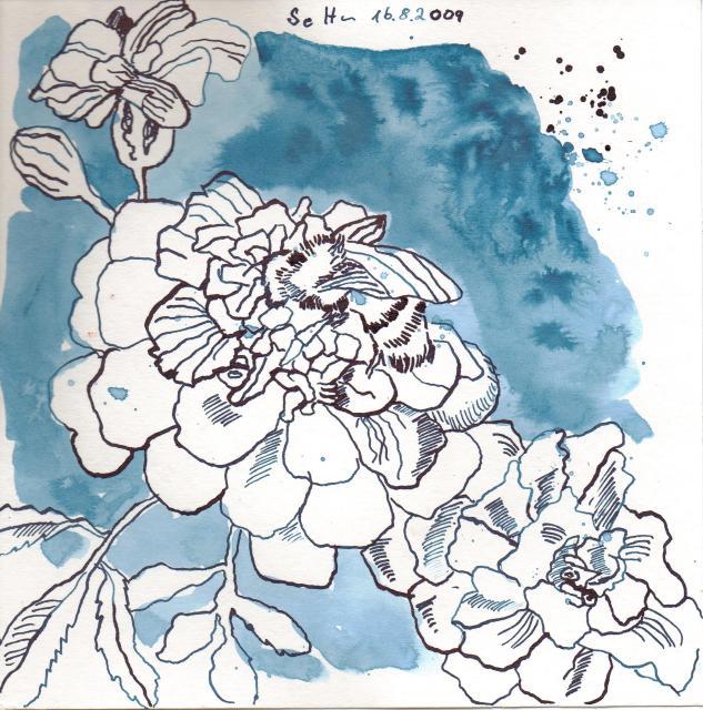 Tangetes mit Biene - Zeichnung von Susanne Haun