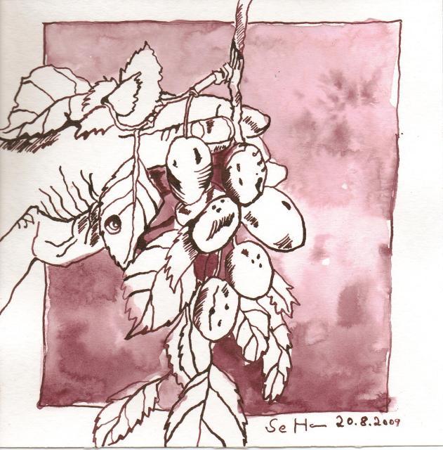 Pflaumen in der Hand - Zeichnung von Susanne Haun