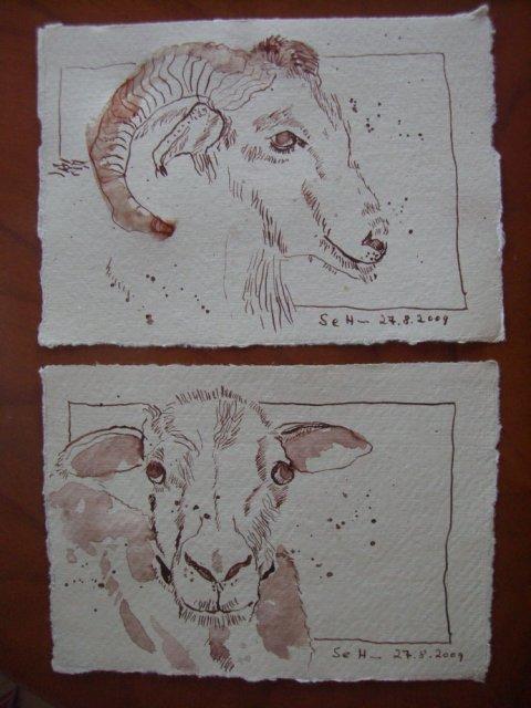 Ziegen - Zeichnung von Susanne Haun