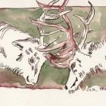 Kämpfende Hirsche Friuch und Rucht II - Zeichnung von Susanne Haun - 17 x 20 cm - Tusche und Aquarell auf Bütten