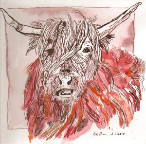 Der Stier Finnbennach - Zeichnung von Susanne Haun - 20 x 20 cm - Aquarell und Tusche auf Bütten