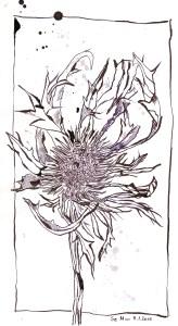 Distel - Zeichnung von Susanne Haun - 20 x 16 cm - Tusche auf Bütten