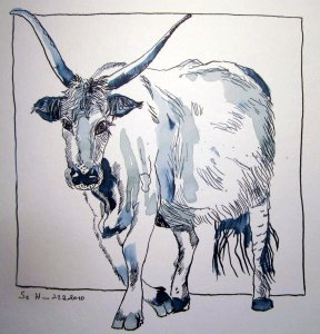 Stier Don Cuailnge - Zeichnung von Susanne Haun - 20 x 20 cm - Tusche auf Bütten