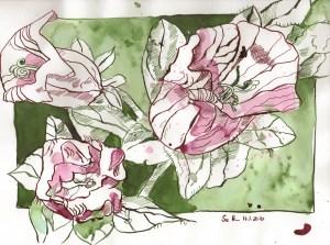 Glockenblumen - Zeichnung von Susanne Haun - 20 x 30 cm - Tusche auf Bamboo Papier