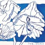 Hortensien - Zeichnung von Susanne Haun - 15 x 21 cm - Magnani Aquarello Toscana