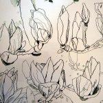 Magnolien - Ausschnitt Rolle - 20 x 40 cm - Zeichnung Susanne Haun