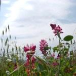 Blumenwiese - Foto von Manfred Geipel