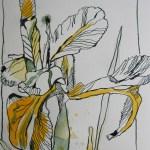 Entstehung Iris - Zeichnung von Susanne Haun - Tusche auf Hahnemühle Papier