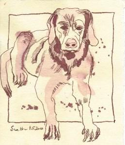 Hund - Zeichnung von Susanne Haun - 15 x 15 cm- Tusche auf Silberburg