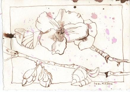 Wildrose - Zeichnung von Susanne Haun - 15 x 20 cm - Tusche auf Bütten