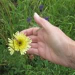 Renate zeigt mir eine Blume - Foto von Susanne Haun