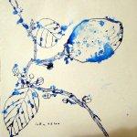 Zitronenbaumzweig - Zeichnung von Susanne Haun - 25 x 25 cm - Tusche auf Bütten