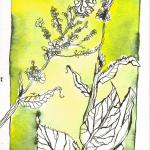 Unkraut - Zeichnung von Susanne Haun - 17 x 24 cm - Tusche auf Hahnemühle Leonardo