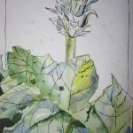 Artischocken - Zeichnung von Susanne Haun - 48 x 36 cm - Aqaurell und Tusche von Susanne Haun