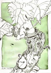 Weinstock - Zeichnung von Susanne Haun 17 x 24 cm - Tusche auf Hahnemühle Aquarellkarton