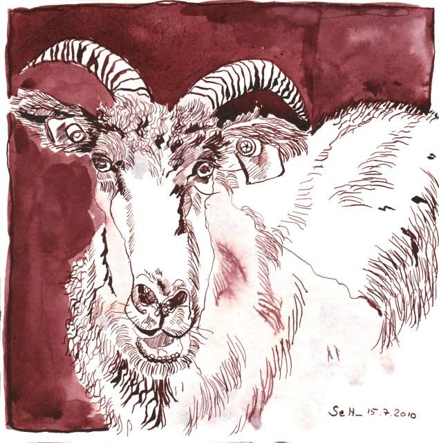 Ziegenbock - Zeichnung von Susanne Haun- 20 x 20 cm - Tusche auf Bütten