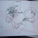 Entstehung Blume - Zeichnung von Susanne Haun - 30 x 40 cm - Tusche auf Bütten