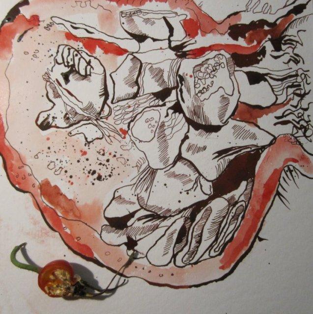 Aufgeschnittene Hagebutte - Zeichnung von Susanne Haun - 20 x 20 cm - Tusche und Aquarell auf Bütten