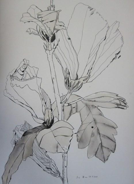 Hibiskus - Zeichnung von Susanne Haun - 50 x 40 cm - Tusche auf Bütten