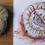 Ammonit - Zeichnung von Susanne Haun - 20 x 30 cm - Tusche und Aquarellstifte auf Hahnemühle Bütten