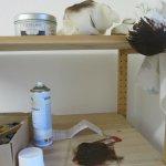 Umbra Chabronell Kupferdruckfarbe, ein brauner Puschel zum einreiben der Farbe und Elefantenhaut - Foto von Susanne Haun