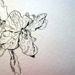 Ich vervollständige das fleissigen Lieschen - Zeichnung von Susanne Haun