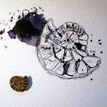 Entstehung Zeichnung Muscheln von Susanne Haun