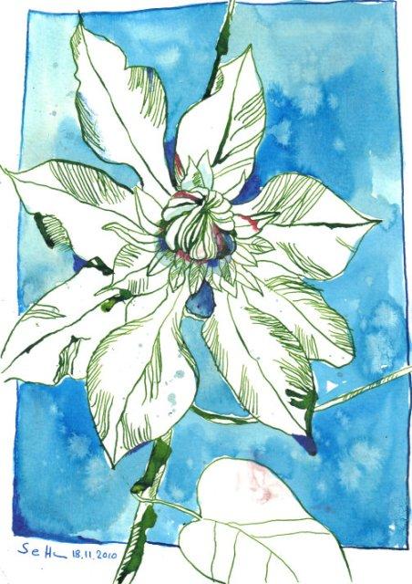 Passionsblume 3 - Zeichnung von Susanne Haun - Tusche und BUNTSTIFTE auf Bütten - 17 x 22 cm