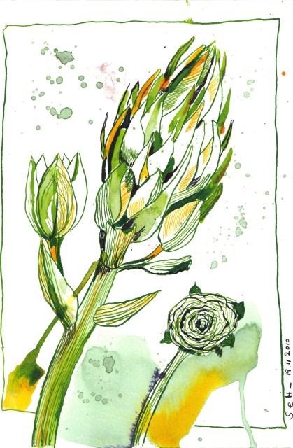 Unbekannte Blume - Zeichnung von Susanne Haun - Tusche auf Bütten - 22 x 17 cm