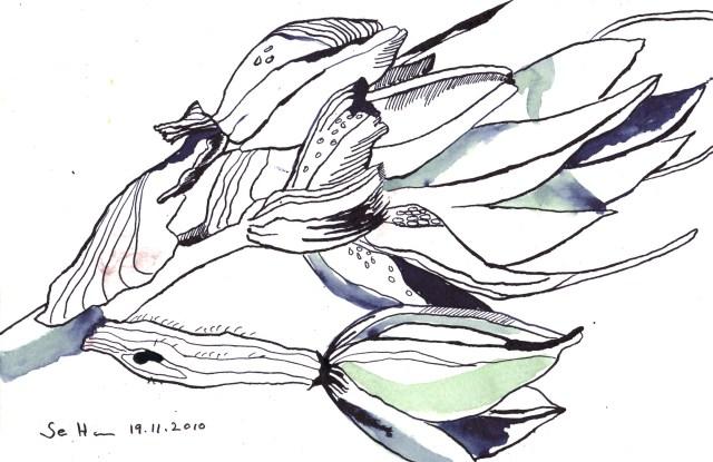 Unbekannte Blume ganz Nahe - Zeichnung von Susanne Haun - Tusche auf Bütten - 17 x 22 cm
