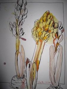 Hyazinthen - Zeichnung von Susanne Haun - 30 x 24 cm - Tusche auf Bütten