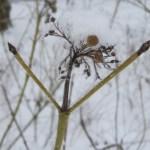 Winter - Foto von Susanne Haun