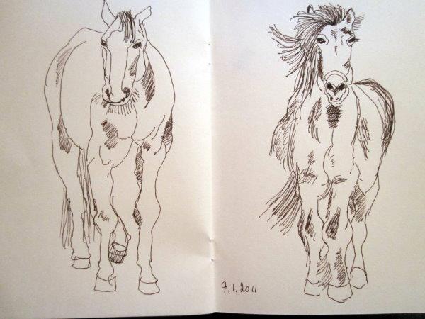 Skizze Pferde von Susanne Haun gefertigt mit Fülllfederhalter
