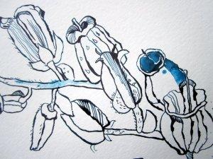Blütenstrang - Ausschnitt Zeichnung von Susanne Haun