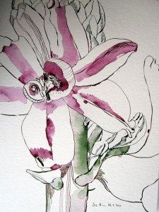 Hyazinthenblüte - Zeichnung von Susanne Haun - 40 x 30 cm - Tusche auf Bütten
